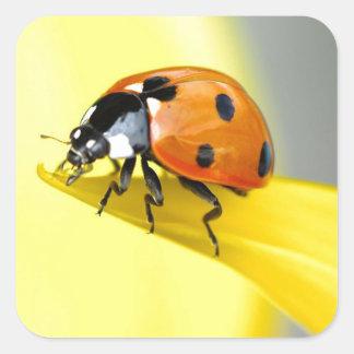 Seven Spot Ladybird Takes a Walk on a Sunflower Square Sticker
