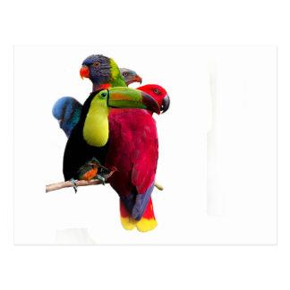 Seven Tropical Bird's Postcard