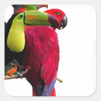 Seven Tropical Bird's Square Sticker