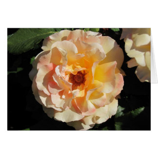 Seventh Chakra Rose Card