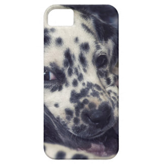Several Dalmatian puppy with stains iPhone SE/5/5s Case