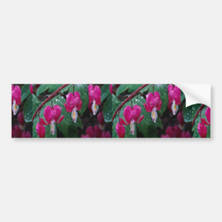 Several flowers of bleeding heart plant and water bumper stickers