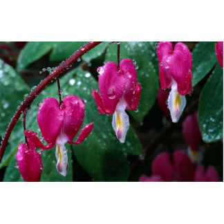 Several flowers of bleeding heart plant and water statuette