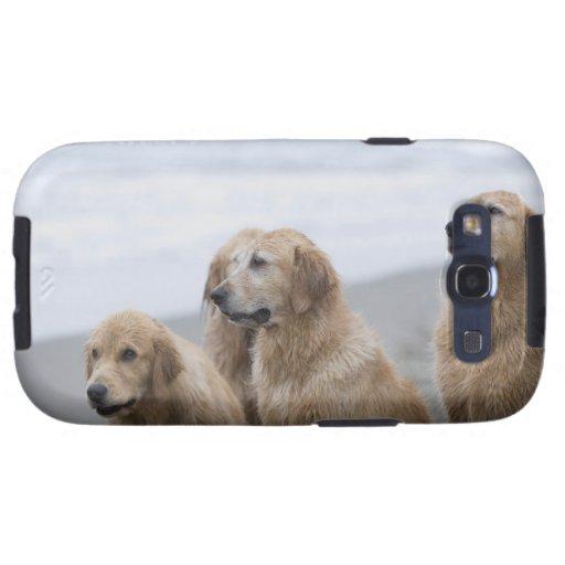 Several Golden retrievers sitting on beach Samsung Galaxy SIII Case