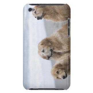 Several Golden retrievers sitting on beach iPod Touch Case-Mate Case