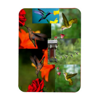 several humming birds magnet