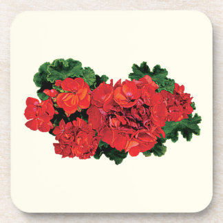Several Red Geraniums Coaster