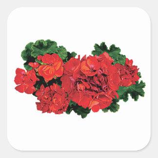 Several Red Geraniums Square Sticker