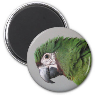 Severe Macaw Magnet
