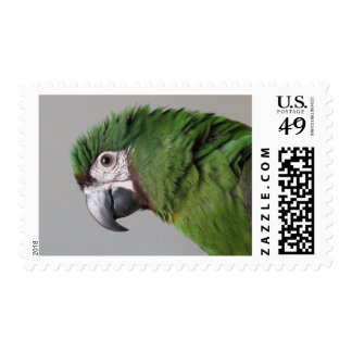 Severe Macaw Postage Stamps