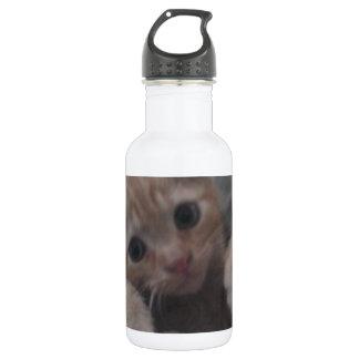 Sevi el gatito del jengibre