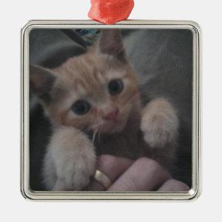 Sevi el gatito del jengibre ornatos