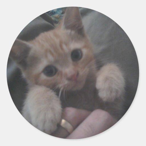 Sevi el gatito del jengibre pegatina redonda