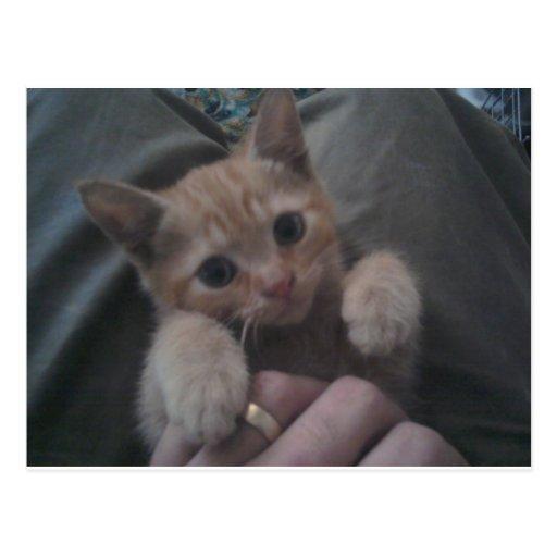 Sevi el gatito del jengibre postal
