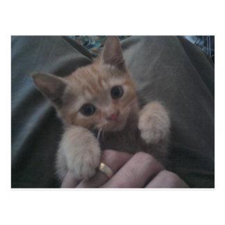 Sevi el gatito del jengibre postales