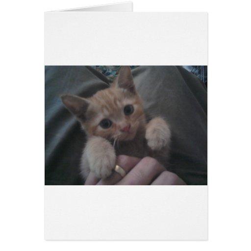 Sevi el gatito del jengibre tarjeta de felicitación