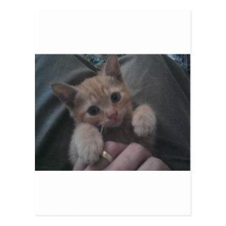Sevi the Ginger Kitten Postcard