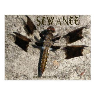 Sewanee Dragonfly - OlioStudios.com Postcard