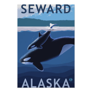 Seward, AlaskaOrca and Calf Scene Poster