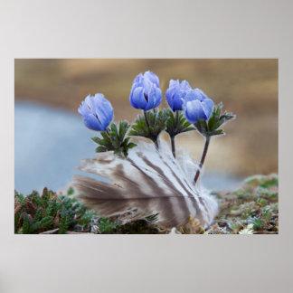 Seward Peninsula, Alaska, Arctic Wildflowers Poster