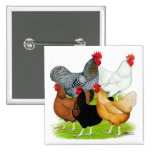 Sex-linked Chickens Quintet 2 Inch Square Button