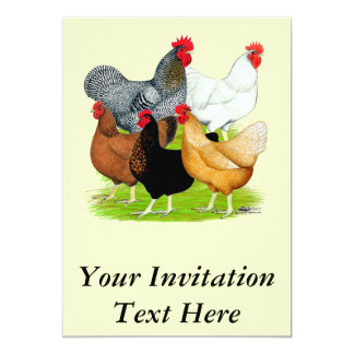 Sex-linked Chickens Quintet Card