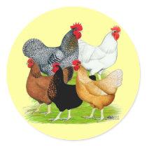 Sex-linked Chickens Quintet Classic Round Sticker