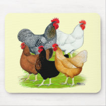 Sex-linked Chickens Quintet Mouse Pad