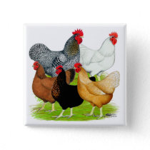 Sex-linked Chickens Quintet Pinback Button