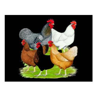 Sex-linked Chickens Quintet Postcard