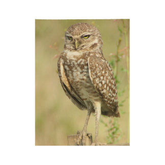 Sexy Burrowing Owl Wood Poster
