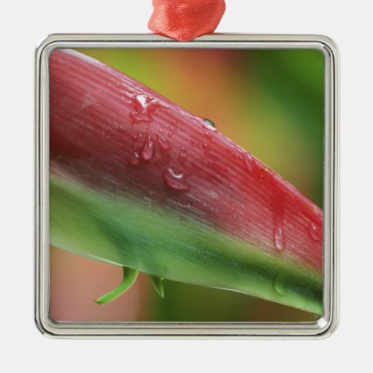 Sexy Pink (Heliconia), Hilo Botanical Garden, Metal Ornament