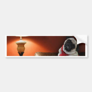 Sexy pug lingerie model, Misha, waiting for you. Bumper Sticker