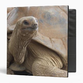 Seychelle Aldabran land tortoise 3 Ring Binder