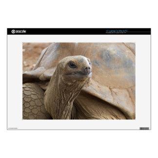 "Seychelle Aldabran land tortoise Decal For 15"" Laptop"