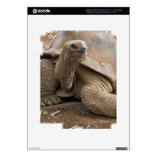Seychelle Aldabran land tortoise Decals For iPad 3