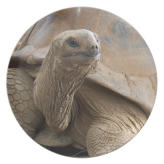 Seychelle Aldabran land tortoise Dinner Plates
