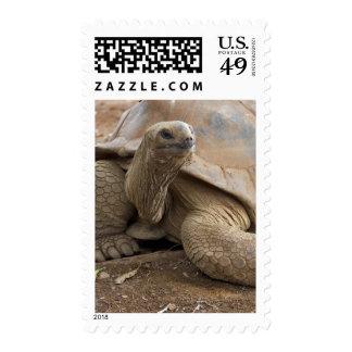 Seychelle Aldabran land tortoise Stamps