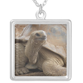Seychelle Aldabran land tortoise Silver Plated Necklace
