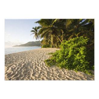 Seychelles, isla de Mahe, Anse Marie-Louise Cojinete
