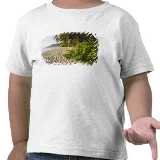 Seychelles, isla de Mahe, Anse Marie-Louise Camiseta