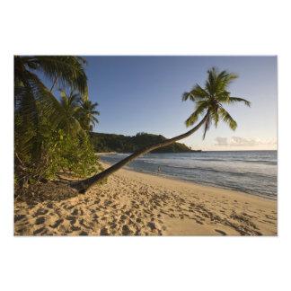Seychelles, isla de Mahe, playa de Anse Takamaka,  Cojinete