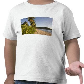 Seychelles, isla de Mahe, playa de Anse Takamaka, Camisetas