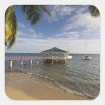 Seychelles, isla de Praslin, Anse Bois de Rose, Colcomania Cuadrada