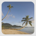 Seychelles, Mahe Island, horizontal palm, Square Sticker