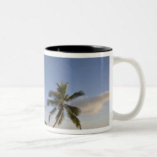 Seychelles, Mahe Island, horizontal palm, Two-Tone Coffee Mug