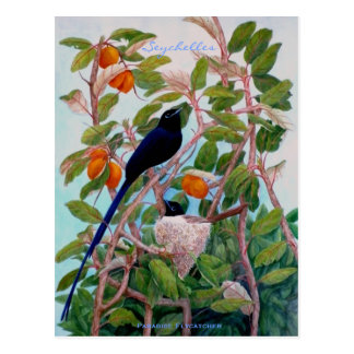 Seychelles Paradise Flycatcher Postcard