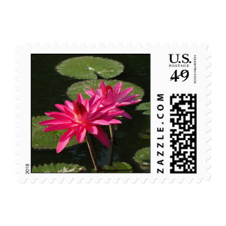 SG 2 Pink Water Lilies postage Stamp  #200  002002