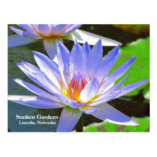 SG Blue water Lily #108N 0108 Postcard