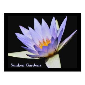 SG Blue water lily Postcard #250N   0250